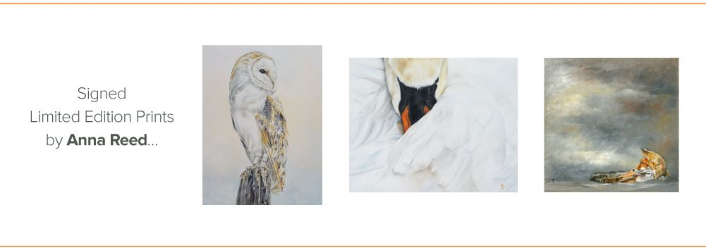 in klöver Art Gallery - Anna Reed Limited Edition Wildlife Prints